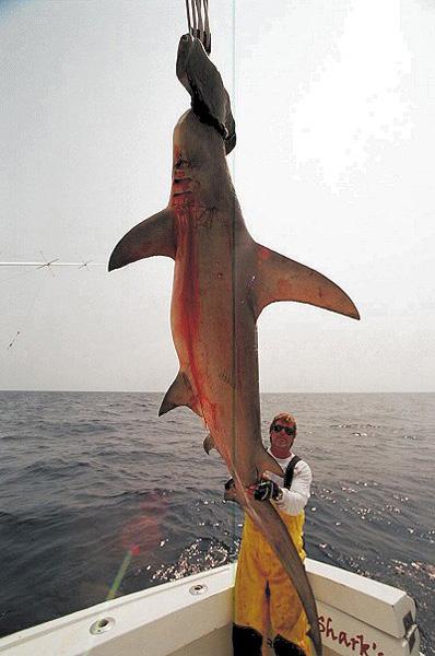 MARK THE SHARK : THE LAST SHARK HUNTER STILL STANDING ...