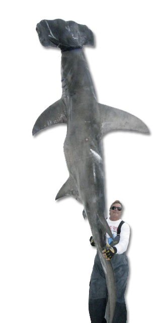 mark the shark
