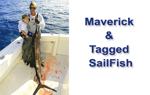 Maverick & Tagged Sailfish